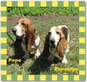 Pepe And Penelope HOTM